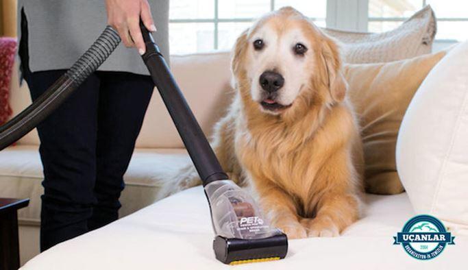 Evcil Hayvanı Olan Evin Temizliği
